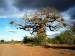 The Kruger National Park in South Africa