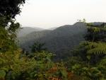 Gorilla Mountains in Uganda Images