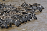 Masai Mara Reserve in Kenya