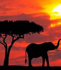 Famous African Safari Destinations