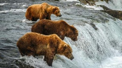 Alaska Travel Guide – Alaska Vacation Advice