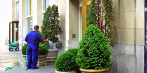 The Basics Of Yard Maintenance And Why You Need To Do It