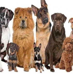 Top 10 Worlds Most Expensive Dog Breed