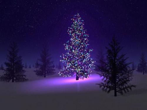Serene Christmas tree